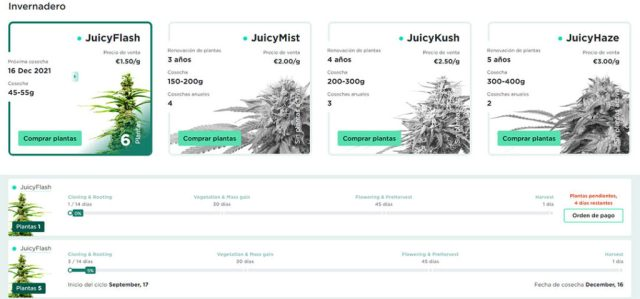 juicy fields es legal