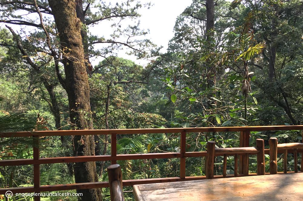 En este jardín se puede filmar una peli entera de Parque Jurásico.