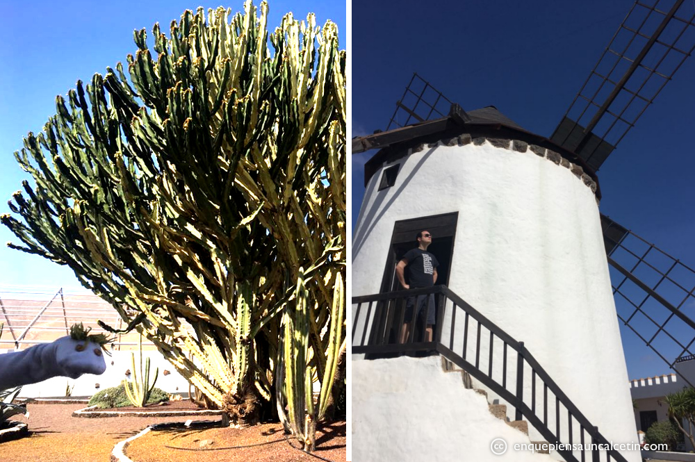 cactus y molino museo del queso majorero