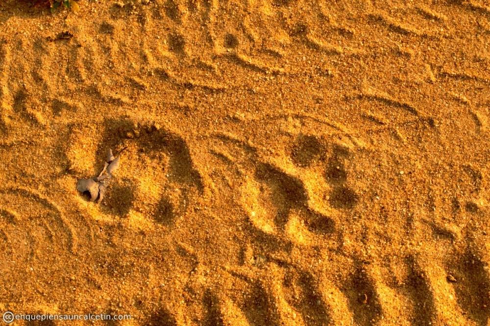 huellas leopardo