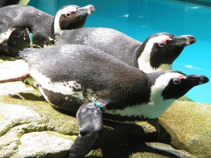 エキスポシティ内で繰り広げられていた、アニメ「マダガスカル」の世界 ペンギンがお腹で滑る様子