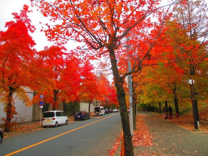 大阪 北摂の紅葉スポット 三色彩道