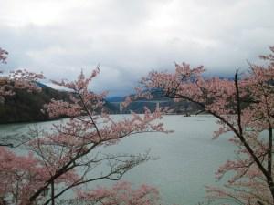 恵那峡 桜