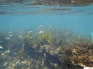琴引浜の魚