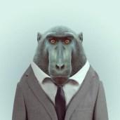 Zoo Portrait by Yago Partal #8