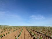Éxito en las nuevas plantaciones de nuestros clientes.