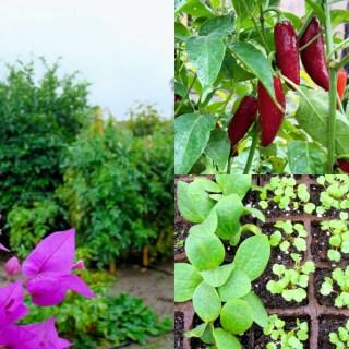 Tiempo de sembrar, tiempo de cosechar