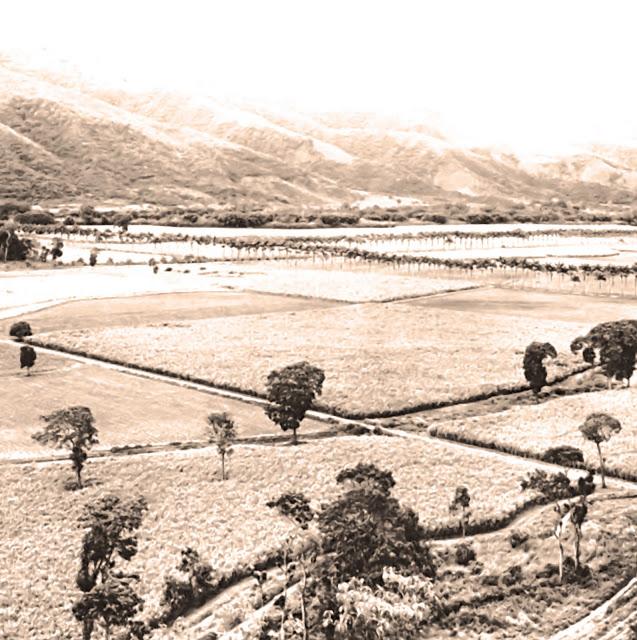 Hacienda Santa Teresa, circa 1960