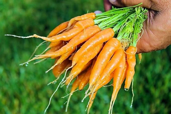 zanahorias, producto de mi huerta