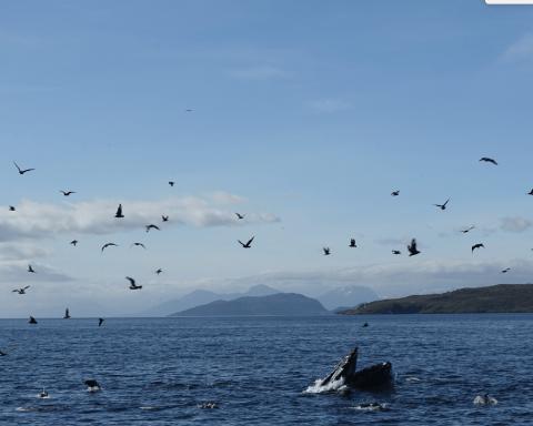 whale sound 2