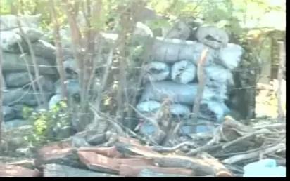 Zona fronteriza quedando sin árboles, por los carboneros