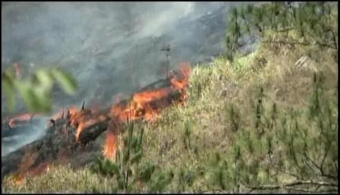 Incendio destruye bosque en Constanza