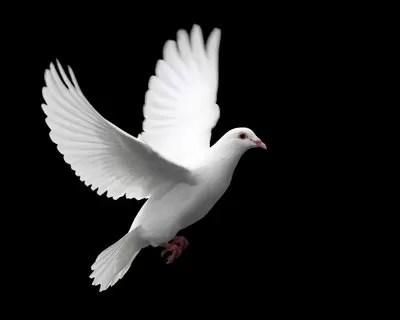 El papa libera dos palomas, símbolo de paz, pero éstas rehusan partir