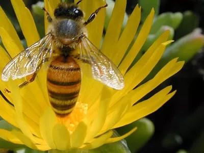 Grupo británico planta flores para aumentar población de abejas