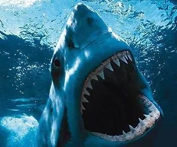 Aumentan ataques de tiburones