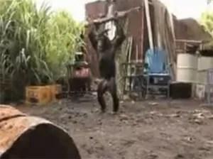 Se reveló el mono y bien armado (video)
