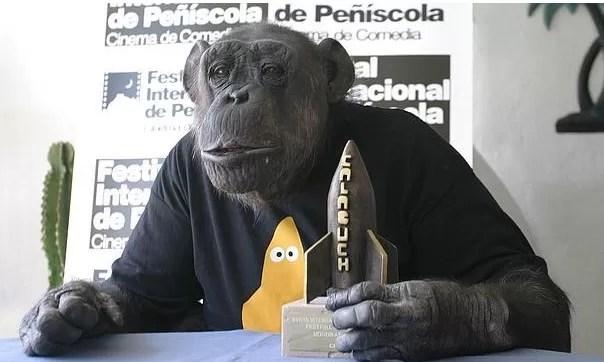 Muere el chimpancé Chita, que protagonizó filmes de Tarzán