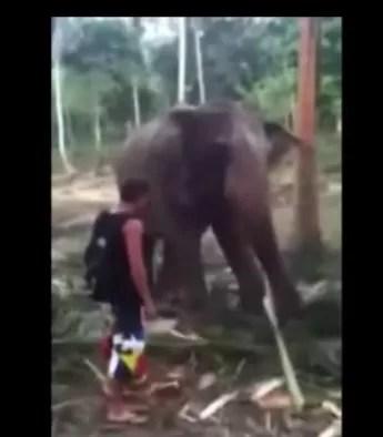 Elefante se rebela contra un turista (video)