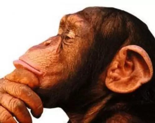 Monos de jardín zoológico beben vino caliente durante el invierno