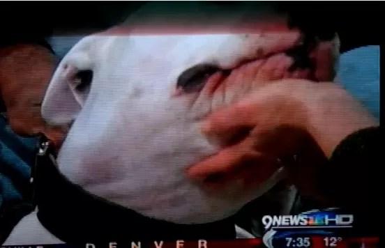 Perro ataca conductora de TV en vivo (video)