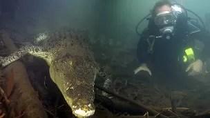 Buceando con cocodrilos salvajes