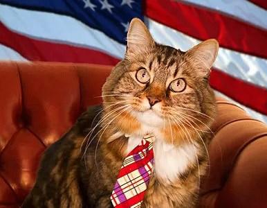 Un gato como candidato independiente al senado de EE.UU.