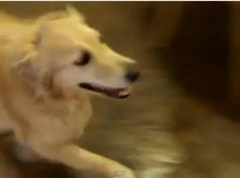 La perrita más organizada del mundo (video)