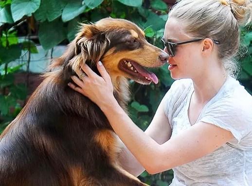 Beso a perro