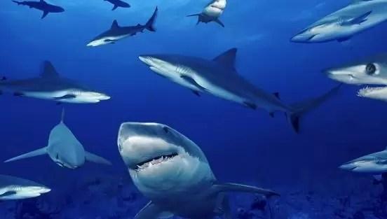 Cifra récord de ataques de tiburón en 2015 en el mundo con 98