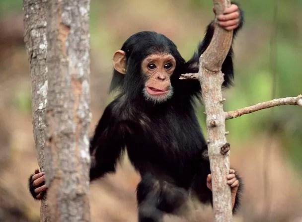 Un mono que estornuda y un pez que «camina»