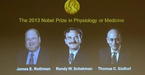 El Nobel de Medicina premia hallazgos sobre sistema de transporte celular