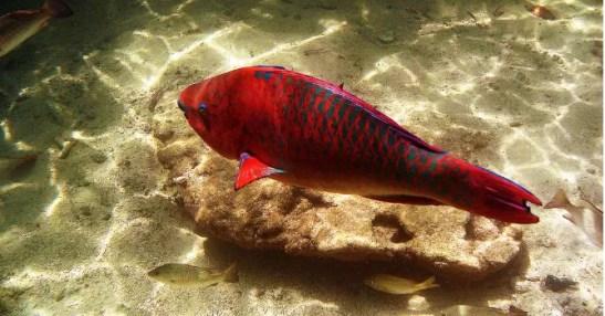peces-editada