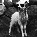 unusual-animal-markings-39b1