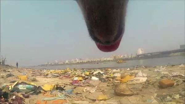 perro-callejero-India-registrada-GoPro_CLAIMA20150515_0076_28