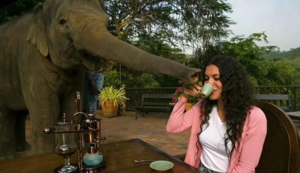 Cafe de elefante