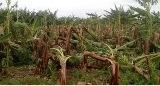 Erika dejó pérdidas millonarias en la República Dominicana