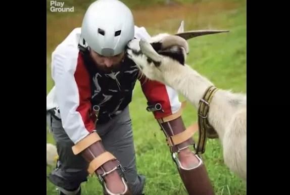 La extraña vida del hombre-cabra británico