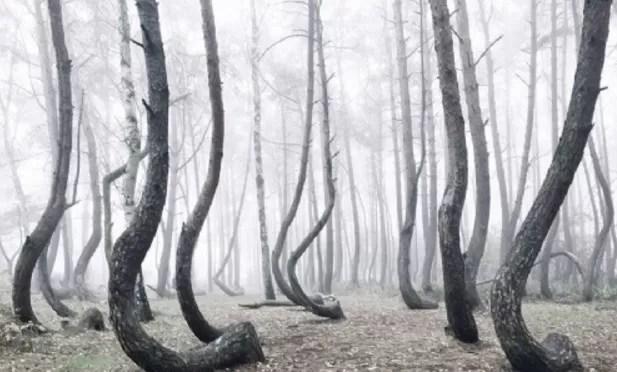 bosque, arboles