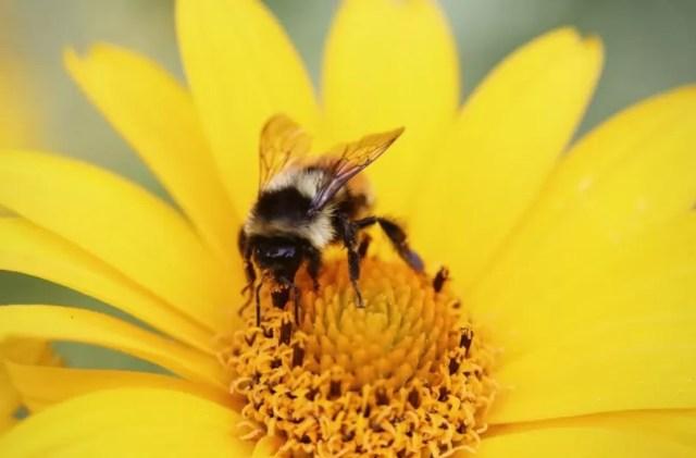 Imagen cortesía de lifeofpix.com