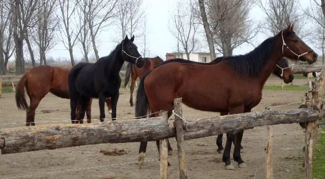 Por primera vez se demuestra que los caballos leen las emociones humanas