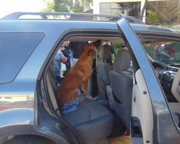 jeepeta-perro