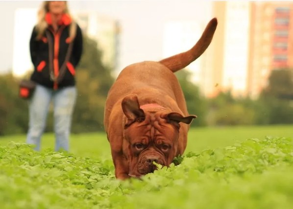 perro-paseo