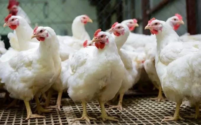 """""""El pollo está carísimo"""": consumidores en supermercados"""