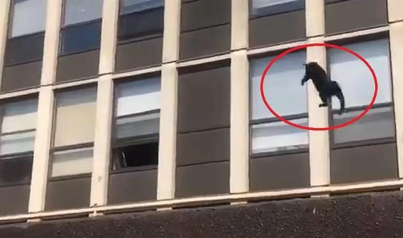 Video: Un gato salta desde la quinta planta de un edificio en llamas; mira el desenlace