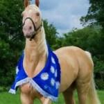 Piden aprobación de proyecto que declara al caballo de paso Higueyano raza nacional