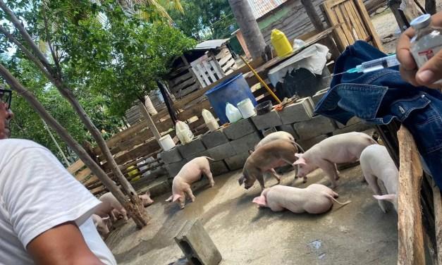 Haití prohíbe importación de carne porcina procedente de República Dominicana
