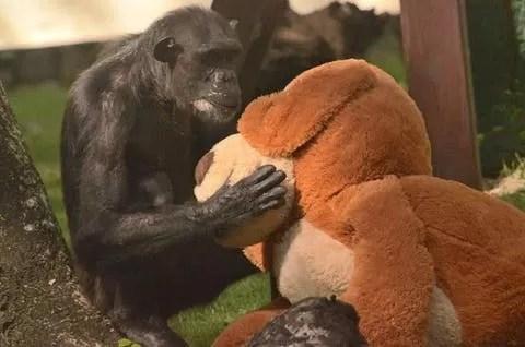 Situaciones especiales que se ven en el Zoológico Nacional