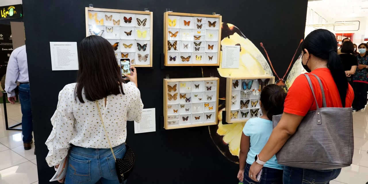 """Museo Natural traslada su exhibición """"Seis patas en acción"""" a  Galería 360"""