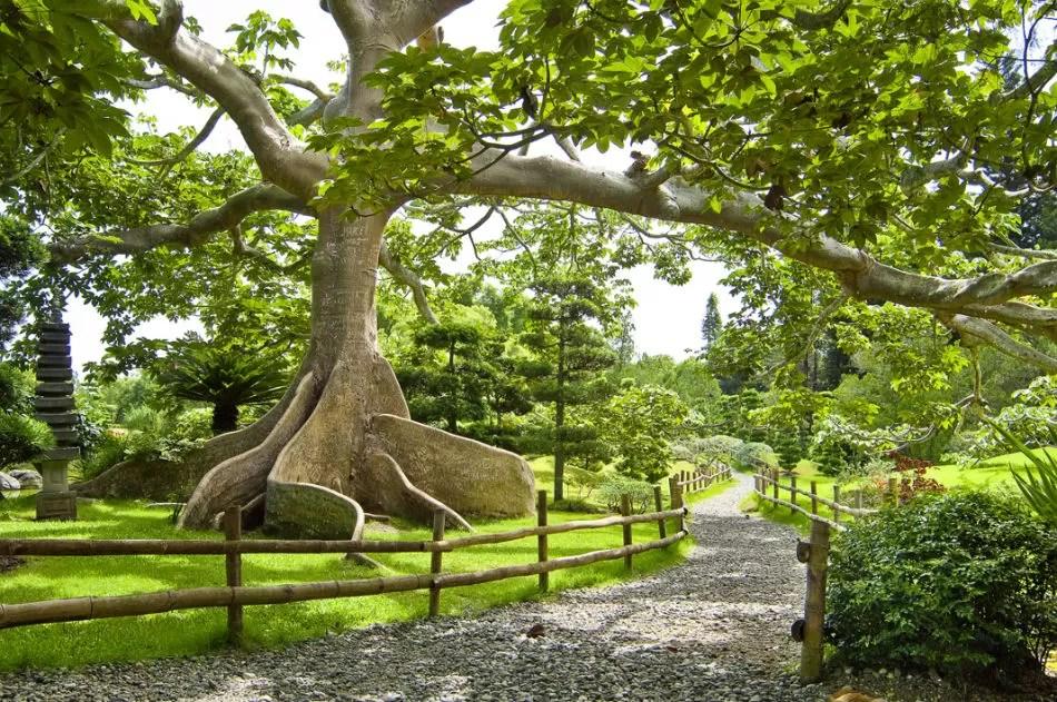 Al Jardin Botánico si con cámaras profesionales quieres entrar 2 mil tendrás que pagar