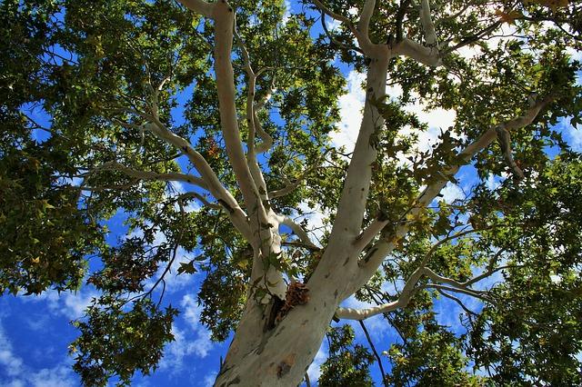 Tahukah Anda Ada Penyandang Status Jomblo Yang Nekat Menikahi Pohon dan Ular Kobra